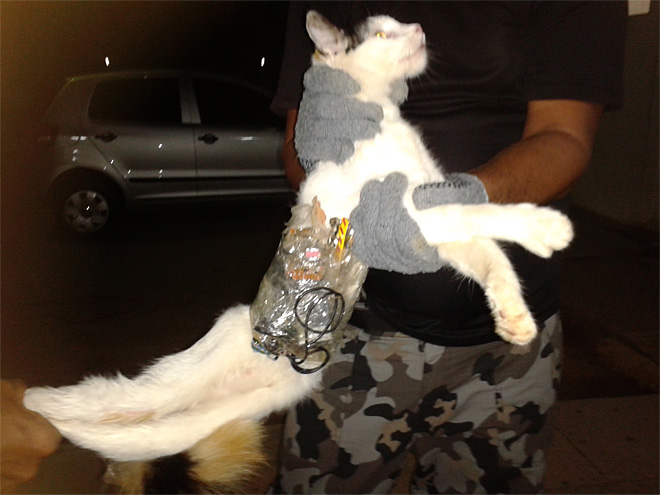 Cat caught red-pawed in Brazil prison smuggling try