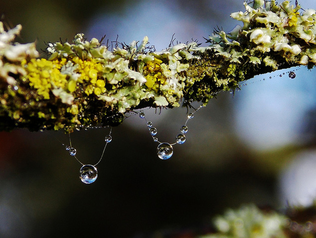Raindrops in Photos