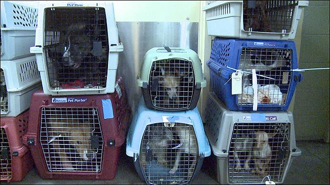 Over 140 dogs seized in Marion County, taken to OHS for care