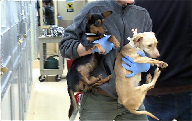 Dozens Of Dogs Rescued In Marion County