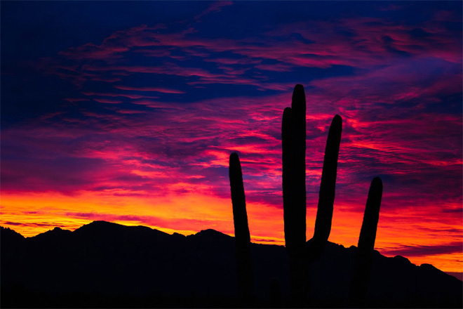 Photos: Arizona desert puts on spectacular natural displays