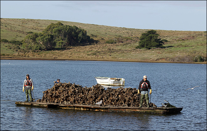 Oyster farm challenges eviction from park in court