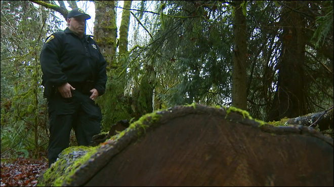 Thieves hacking down majestic trees to support drug habit
