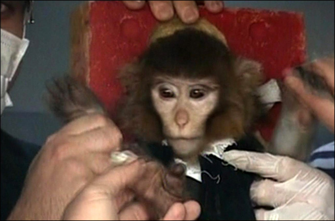Iran says it sent monkey into space and back