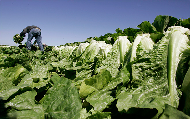 Study says leafy greens top food poisoning source