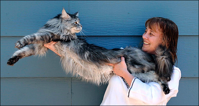 Stewie, the world's longest cat, dies in Nevada
