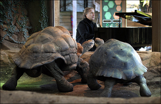 Romantic concert fails to put tortoises in the mood