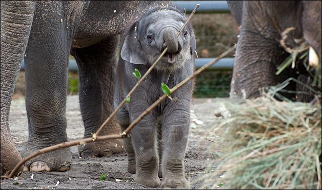 Zoo spends $400k to void contract, take ownership of elephants