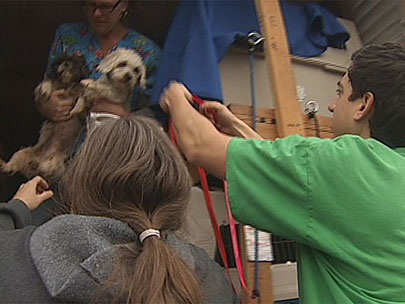 Dogs from LA seek new homes in Oregon