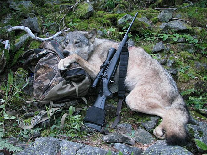Idaho lawmakers back $2 million to kill wolves