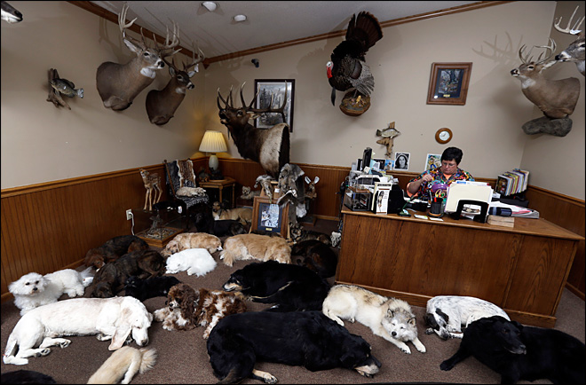 Taxidermist specializes in freeze-drying dead pets