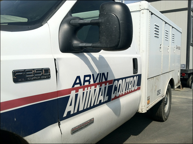 Dog found rotting in animal control truck had been hit by car