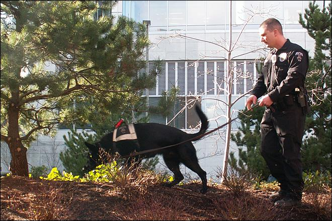 Legal pot means big changes for Washington's drug-sniffing dogs