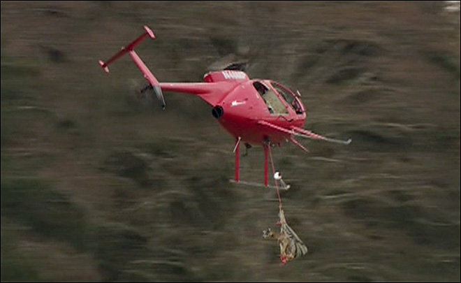 Up and Away! Endangered deer get ride out of threatened refuge