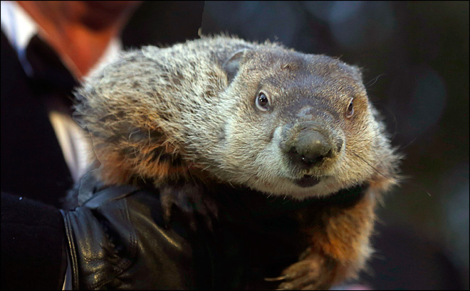 Punxsutawney Phil's day coincides with Super Bowl