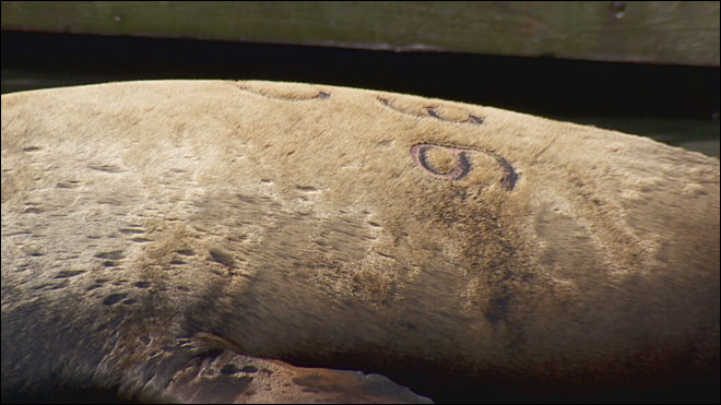 Anti-whaling group turns their attention to Oregon's sea lions