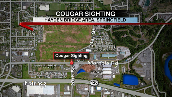 Cougar spotted in Springfield