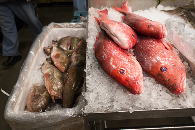 NYC Fish Market