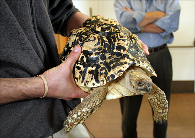 Case solved: Tortoise in elevator wasn't stolen, just hidden
