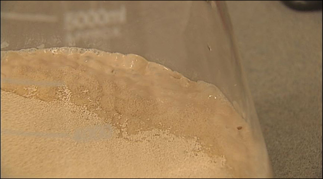 Yeast as the state microbe? 'Craft brewing is huge here in Oregon'