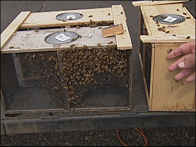 Honey company builds buzz around sting to bee population