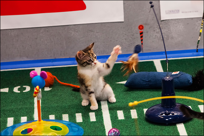 Will copycat 'Kitten Bowl' outdo 'Puppy Bowl'? Stay tuned