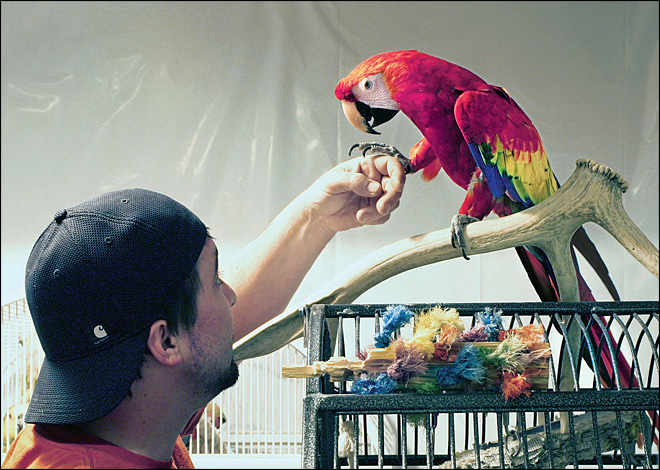 5 years later, man reunited with bird he lost in divorce