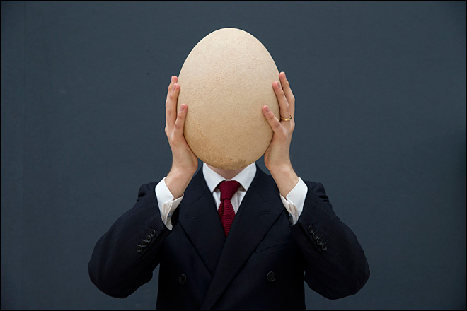 Giant elephant bird egg fetches $101,813 at auction