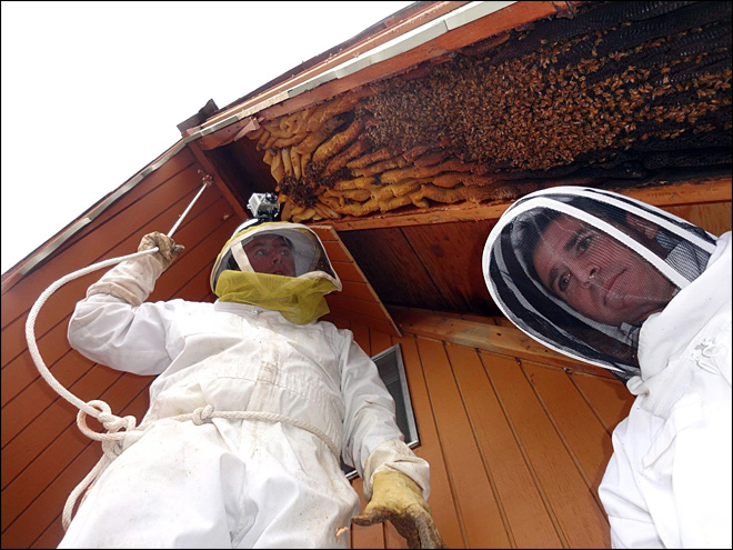 Utah cabin had uninvited guests - 60,000 honeybees