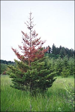 Trees looking a little haggard? Blame it on drought stress