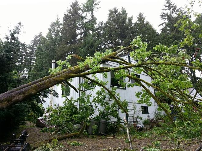 Power outages, downed trees as thunderstorms rake W. Wash.