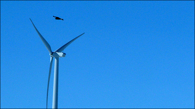 Wind farms get pass on eagle deaths