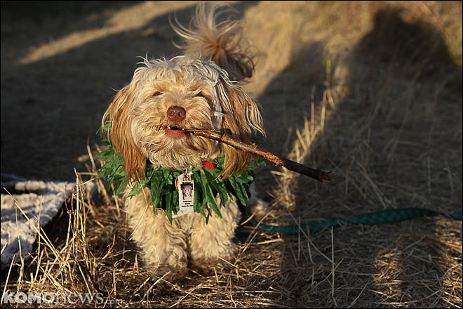 Veterinarian: More marijuana means more poisoned dogs