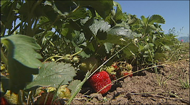 Oregon farmers optimistic after Hep A outbreak: 'Local produce is fine'