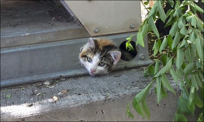 One cool cat! Kitten gets stuck under air conditioning unit