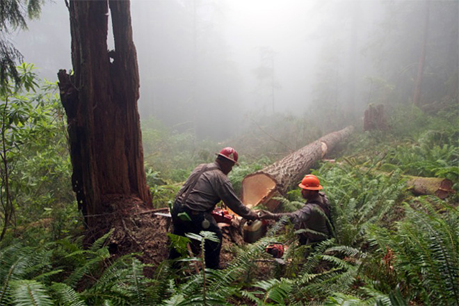 House backs bill to boost logging