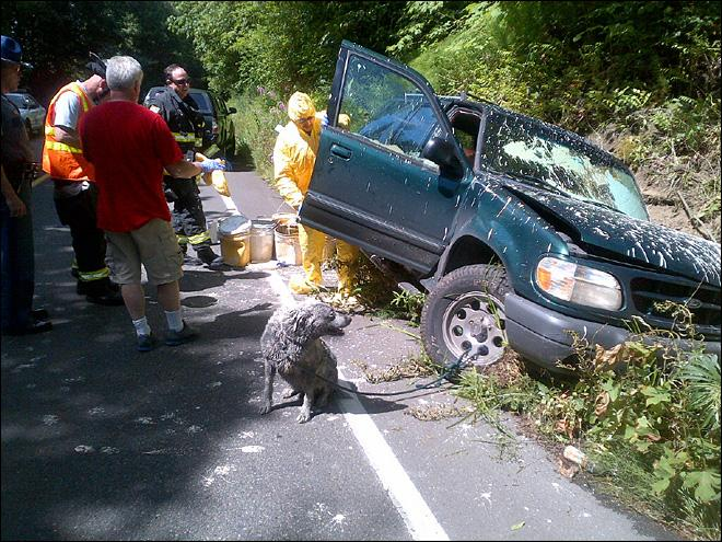 Man, dog covered in paint after Mason Co. car crash