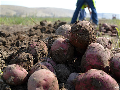 Insurance company denies claims by potato baron