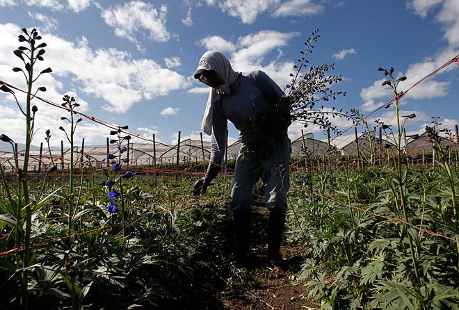 Tariffs may continue to hit Ecuador flower growers if Snowden is helped