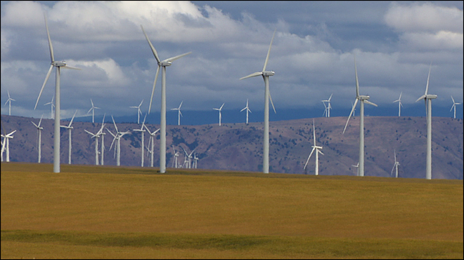 Wind farms touted as 'green' energy source but have impact on birds