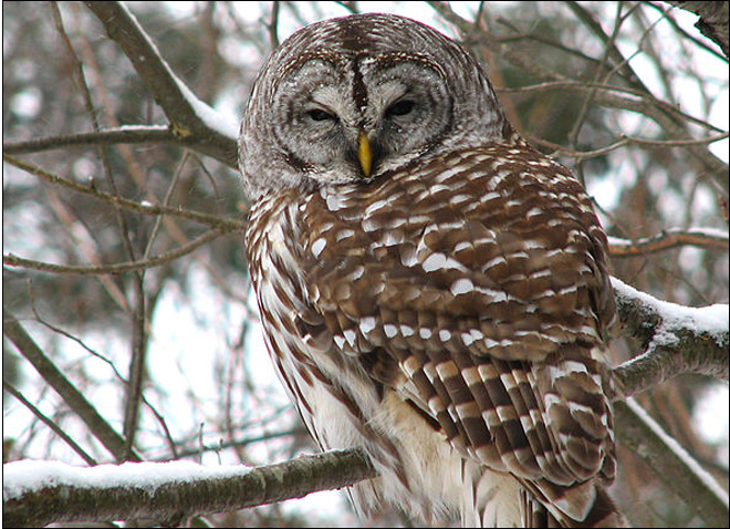 Group files suit to stop barred owl shooting