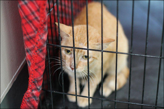 Stowaway cat makes 7,300-mile trip to LA