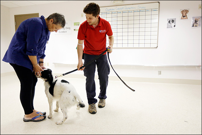 Dogs help sniff out ovarian cancer in new study