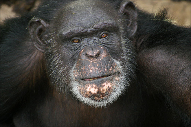 La. chimpanzee wins 1st prize in nationwide art contest