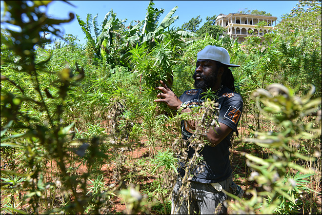In Jamaica, a twist on wine tours for pot lovers