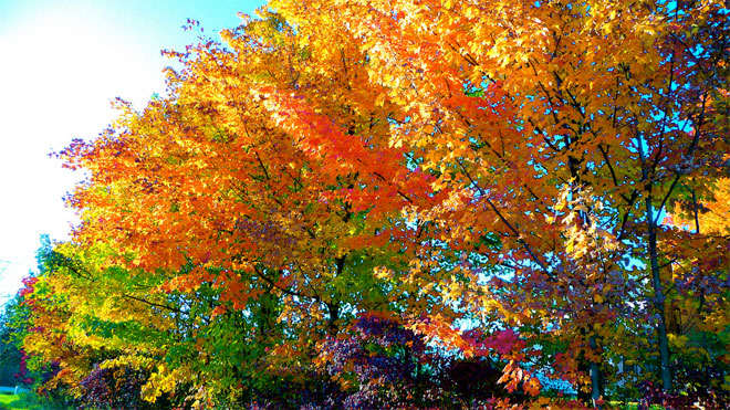 It's fall color season - where are some of the best places to go?