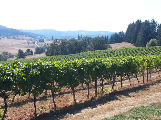Winemaker: Late summer heat adds flavorful depth to vintage