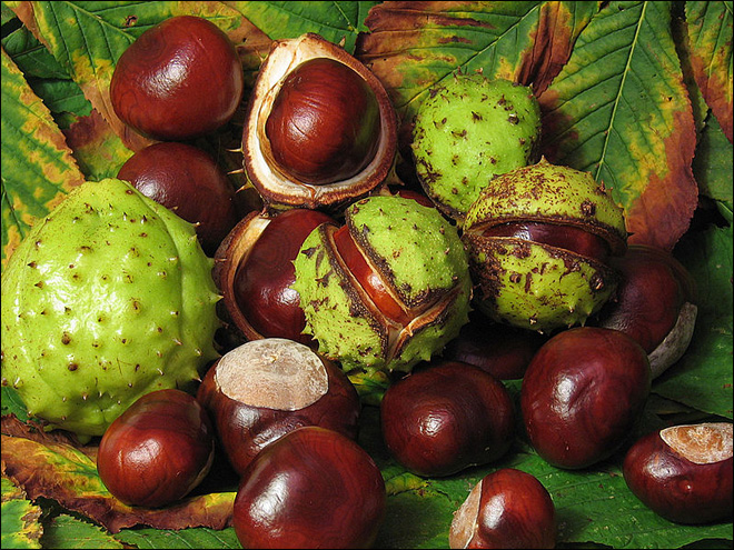 British drivers can pay for parking with horse chestnuts
