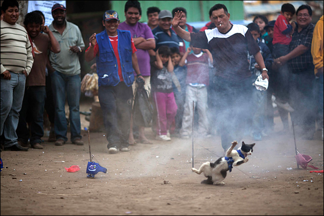 Campaign launched to halt Peru cat-eating festival