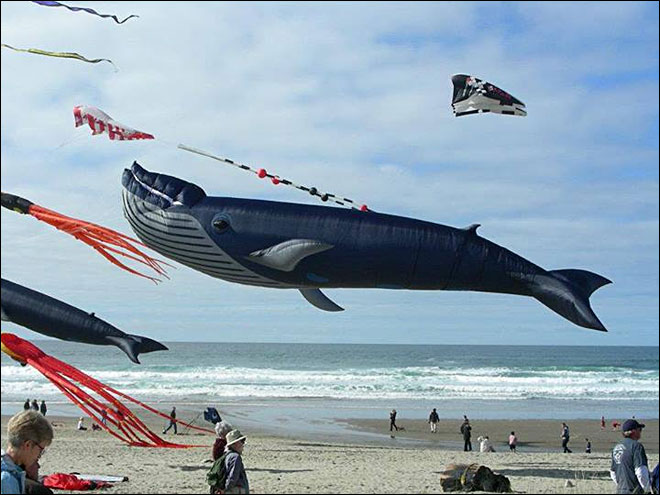 World-class kite fliers will be in Lincoln City this weekend